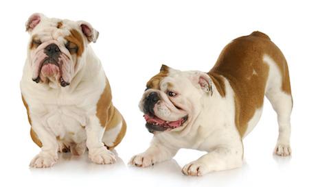 Doggie Date, Dog Date