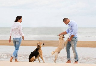 Dog Training, Dog Trainer, Dog Obedience, Dog Behaviour Correction, Sydney