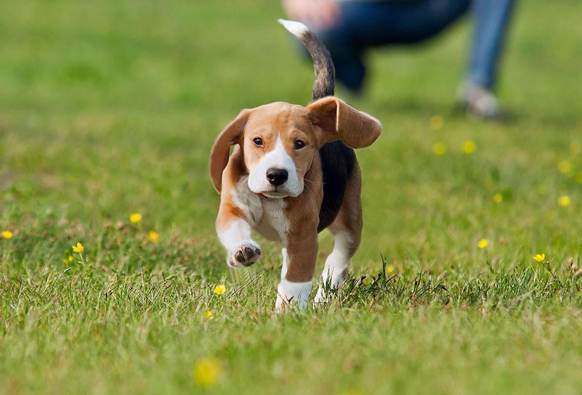 Puppy Classes / Dog Training Sydney