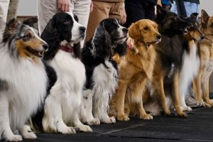 Dog Obedience Training Group