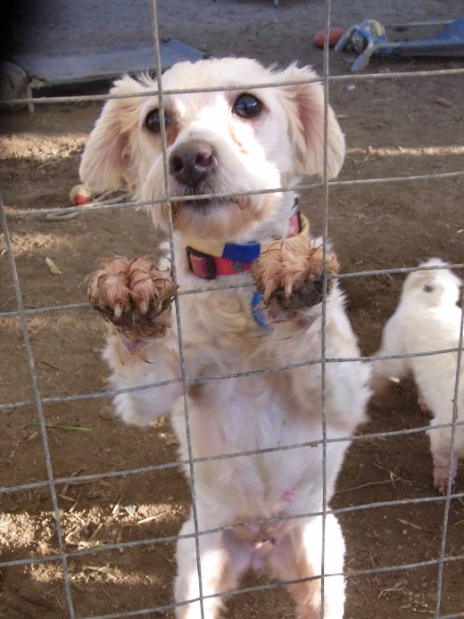 5 Reasons Why Dogs are Abandoned